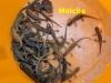 1-fruehjahrswanderung-molche-i-sammeleimer