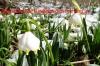 100-maerzenbecher-16-3-2013