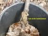 106-17-4-2013-doch-kein-laubfrosch-im-eimer