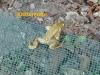 111-17-4-2013-ich-will-zurueck-2