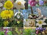 Blütenzaubercollage
