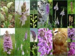 Orchideencollage